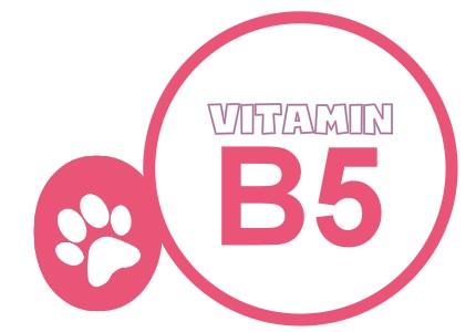 vit-b5